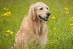 新聞に愛犬の死亡広告を掲載 亡き愛犬の思い出寄せられる
