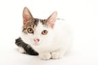 「ゆっくりまばたき」で猫と仲良くなりやすく…英大学が研究