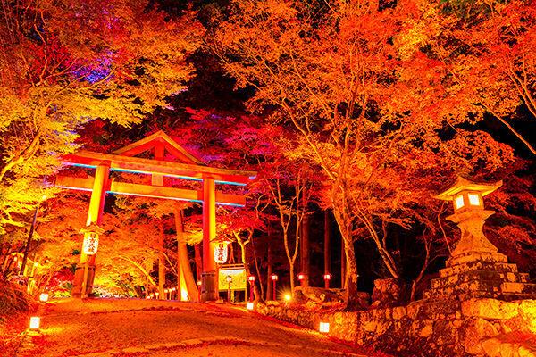 滋賀県・日吉大社の見どころは、山王鳥居と参道の紅葉のコラボレーション(写真:アフロ)