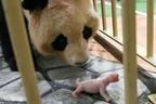 自然界もコロナでベビーブーム!可愛すぎる赤ちゃん動物12