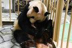 安住アナに宣戦布告! 赤ちゃんパンダの名づけ予想をしてみた。