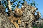 『世界ネコ歩き』岩合光昭さんの可愛すぎる「ネコと牛」写真