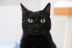 7年前行方不明になった猫と再会…クリスマスに奇跡起こる