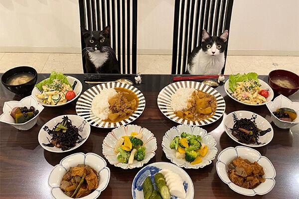 藤あや子の食卓に並んで座るマルとオレオ