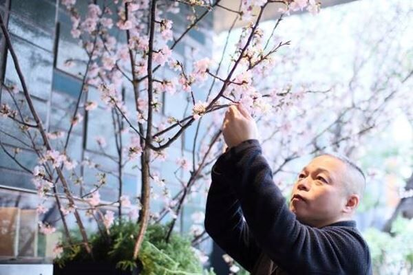 東京・瑞華院に1000本の桜咲く。花人・赤井勝さんがコロナ終息に込めた願い