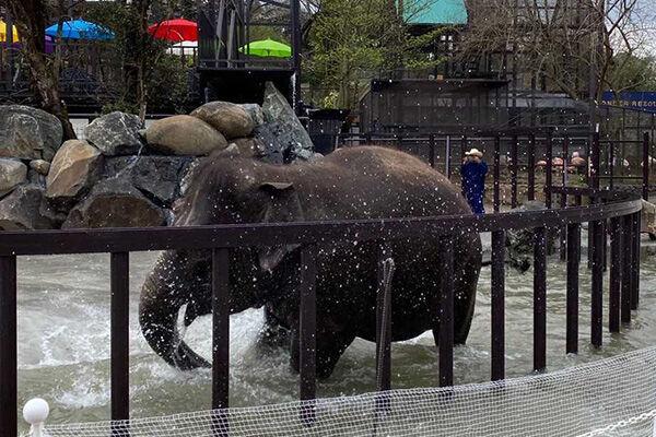 市原ぞうの国がリニューアル 象ロゴのドムドムバーガーも出店
