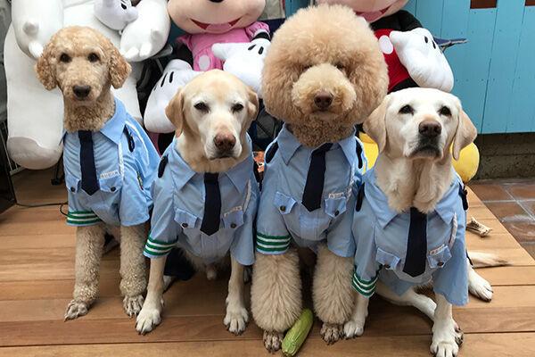ワンちゃんのイベントでも大人気だったという犬視庁のメンバー(@nicorui99さん)