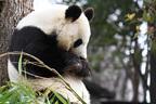 『パンダ自身』編集部が選ぶパンダNEWS上半期ベスト7