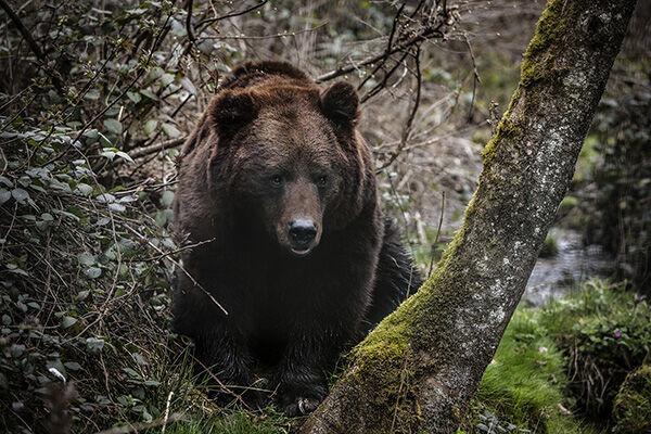 ロシアで1歳女児がクマの出る森で迷子に…3日後に無事発見
