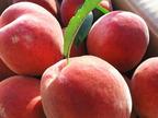 夏に身体を冷やさない唯一の果物、「桃」がすごい!