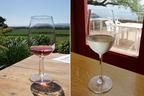 シーズン到来 山梨のワインイベントに行こう!