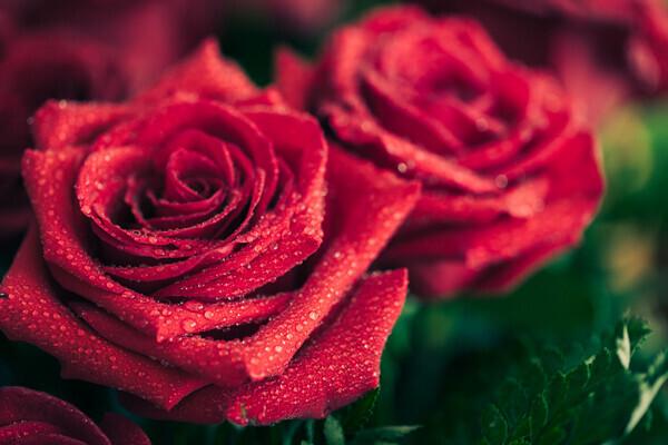 頭の先から爪の先まで、24時間「薔薇力」に癒される!
