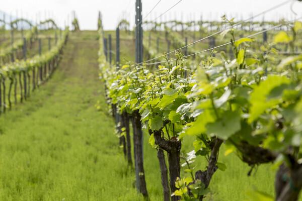 八ヶ岳の恵みを味わう、極上ワインステイ