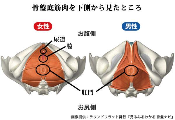 脱・ピーマン尻! 下腹部ぽっこりも解消、骨盤底筋の鍛え方 (動画あり)