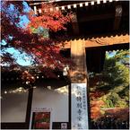 京都の旅、ひとりで入れる美味しいお店