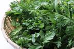 お鍋だけじゃもったいない! キレイになれる冬野菜「春菊」の美味しい食べ方