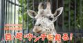 """「夏休みの自由研究」は動物園で。上野動物園おすすめの""""調べ学習""""のテーマとポイント"""