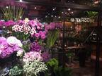 平日に行きたい!お花に包まれた駅近カフェ。同僚男子とのおデートに。~アナウンサー小泉恵未の【コエミの恋するグルメ】Vol.43~