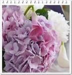 お洒落に飾るコツは? 梅雨の花「アジサイ」で花のある暮らしを