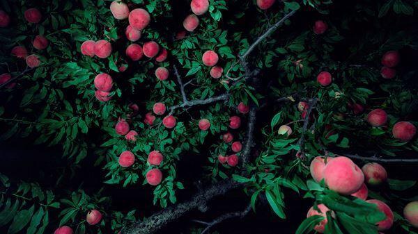 《女神と男神が桃の木の下で別れる:川中島》(部分)2016年作家蔵