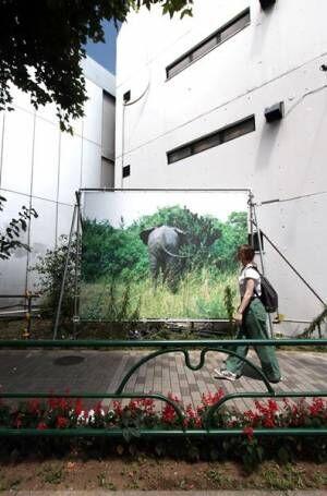島袋道浩「象のいる星」 2008年 撮影:今井紀彰