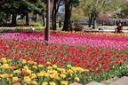 春の恒例イベント「よこはま花と緑のスプリングフェア」がスタート!