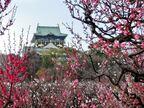 梅のシーズンが到来。大阪随一の観梅スポットは?