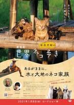 ナレーションは中村倫也に決定 世界的動物写真家が贈る『劇場版 岩合光昭の世界ネコ歩き』2021年1月公開へ