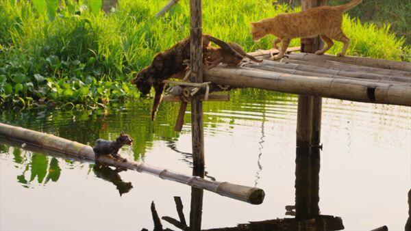 『劇場版 岩合光昭の世界ネコ歩き あるがままに、水と大地のネコ家族』 (c)「劇場版 岩合光昭の世界ネコ歩き 2」製作委員会 (c)Mitsuaki Iwago