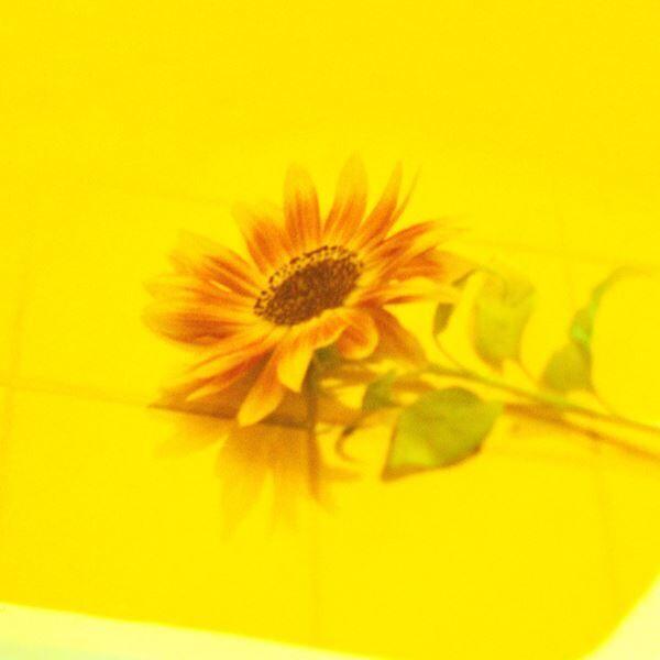 Vaundy、ドラマ『ボクの殺意が恋をした』主題歌「花占い」MVに中川大志&新木優子が出演