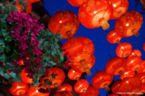 蜷川実花が香港を撮り下ろし!フォトブックやクーポンが貰えるキャンペーン実施中