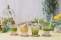 インスタ映えする「青汁カフェ」が、表参道に期間限定オープン!