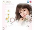大人のウルツヤ瞳を演出!「Acorde」の新色カラコンはフォーチュンピンク