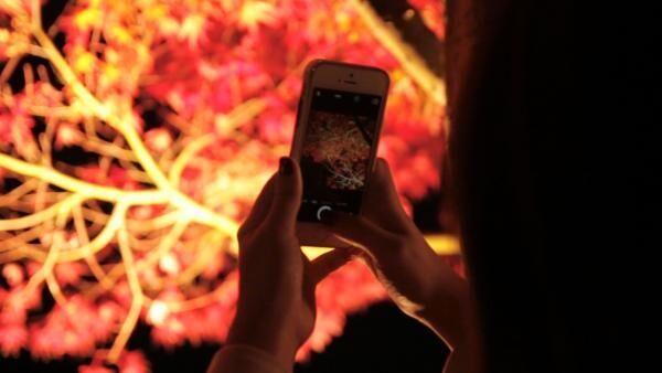 はとバスツアー 河口湖もみじ回廊 ~ライトアップされた紅葉が圧巻! 幻想的で美しい夜景~