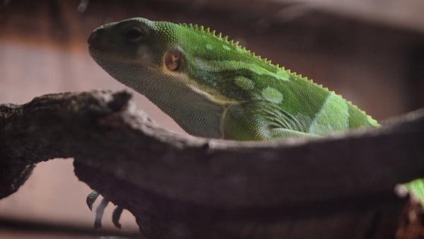 ちょっと変わった動物園「iZoo」で爬虫類・両生類の可愛さを再発見!