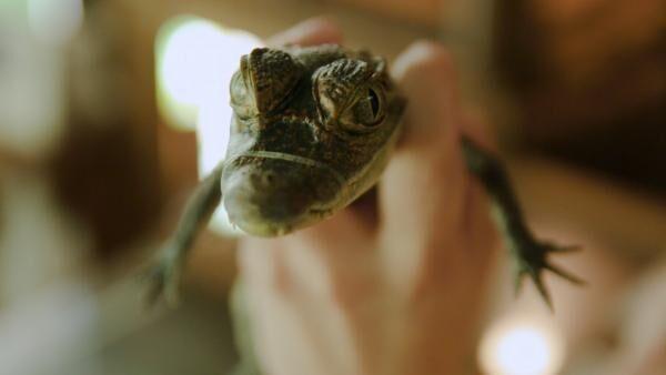 ガッキーも飼ってる♡ 爬虫類女子、必見! 「iZoo」で爬虫類の赤ちゃんを抱っこしよう!
