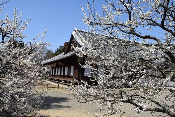 日本三名園に春が来た♡「水戸の梅まつり」で絶景を堪能