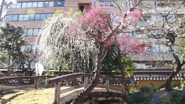 甘い香りと可憐な花に癒やされて。春の訪れを知らせる梅まつり