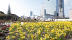 3月18日まで。12万株の花たちが彩る花のイベント開催中