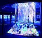 横浜・八景島シーパラダイスで楽しむお花見イベントが開催
