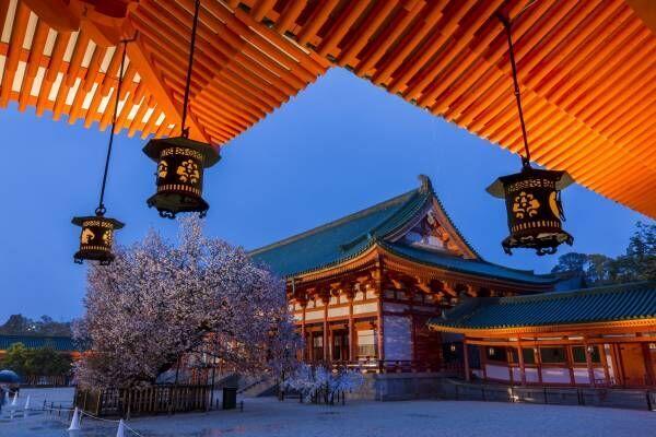 300本の桜に囲まれる!京の都で幻想的なコンサートが開催