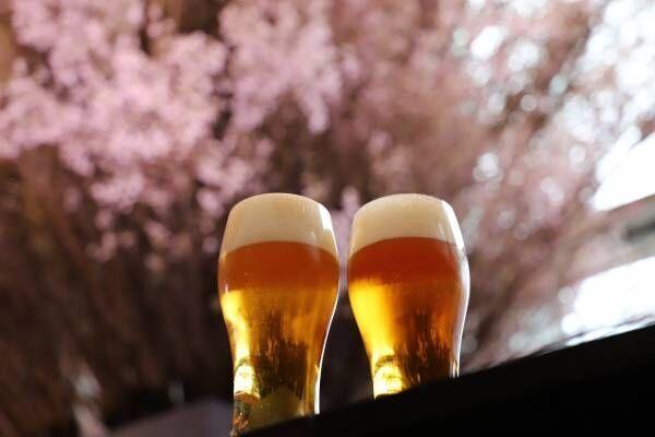 3日間限定イベント!満開の桜とヱビスビールを堪能
