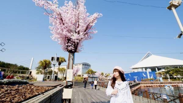 シーパラに光り輝く春が到来。7万匹のイワシが魅せる桜吹雪