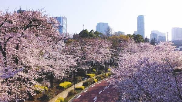 ミッドタウンで春を味わう。食もアートも楽しめる桜イベント