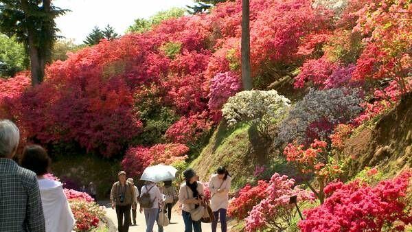 小さな花々が織りなす景色。山を赤く染め上げるつつじ祭り