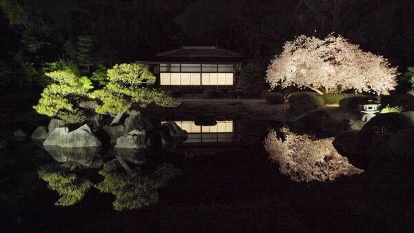 龍が誘う桜の宴へ。二条城でアートなお花見