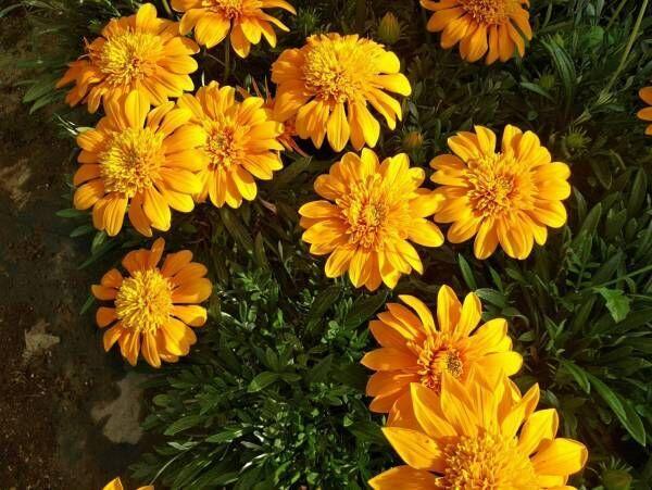 今夏一押しの花が集結「Summer Garden夏花フェスタ」開催!