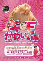 東京スカイツリータウン・ソラマチ。期間限定開催!「キモかわいい展」