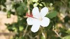 ハイビスカスに囲まれて。ハワイを感じられる温室イベント