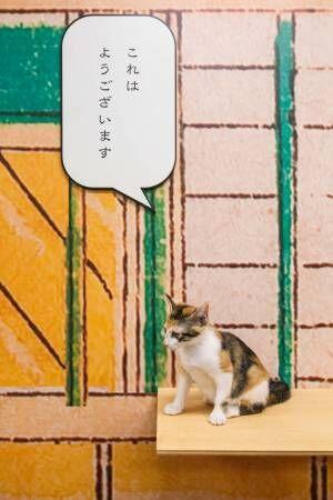 江戸版猫カフェ「江戸ねこ茶屋」 期間限定オープン!
